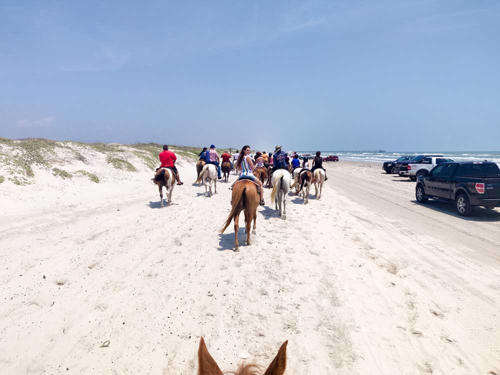 Horses on the beach trail